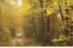 Jean-Paul Durand présente ses photographies à l'occasion de l'exposition Forêt royale du 28 février au 8 mars 2020 à l'espace VERA